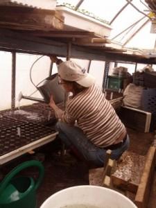 Margie waterin in greenhouse