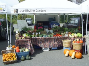 Our booth at the Lakefield Farmers Market