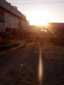 barn yard at dawn